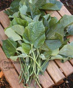Fresh betel leaves, 3 bunches