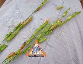 jasmine rice shell