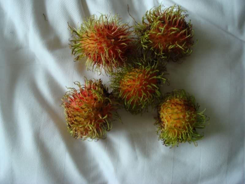 Savory Stuffed Rambutans
