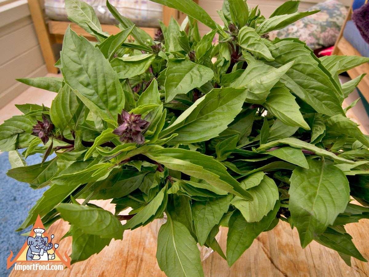 Fresh Thai Basil / ImportFood.com