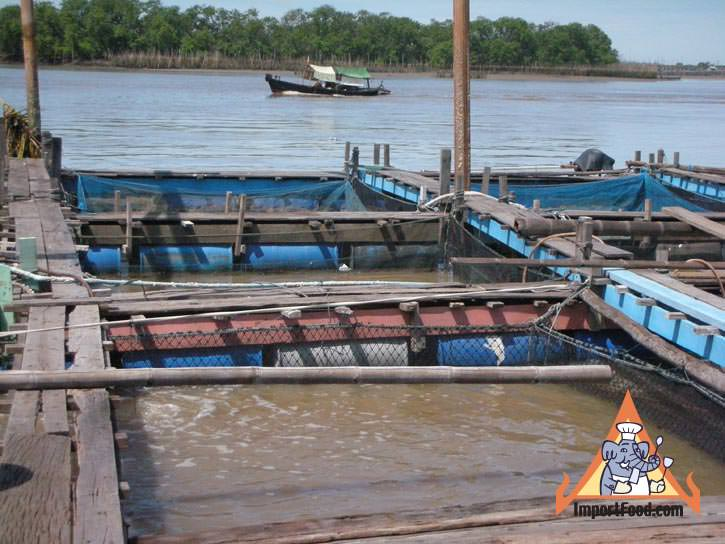 Thai Fish Farm :: ImportFood