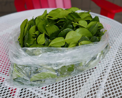 Fresh kaffir lime leaves, 1 lb pack - Wholesale Pricing